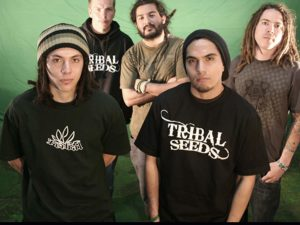 TRIBAL_SEEDS2
